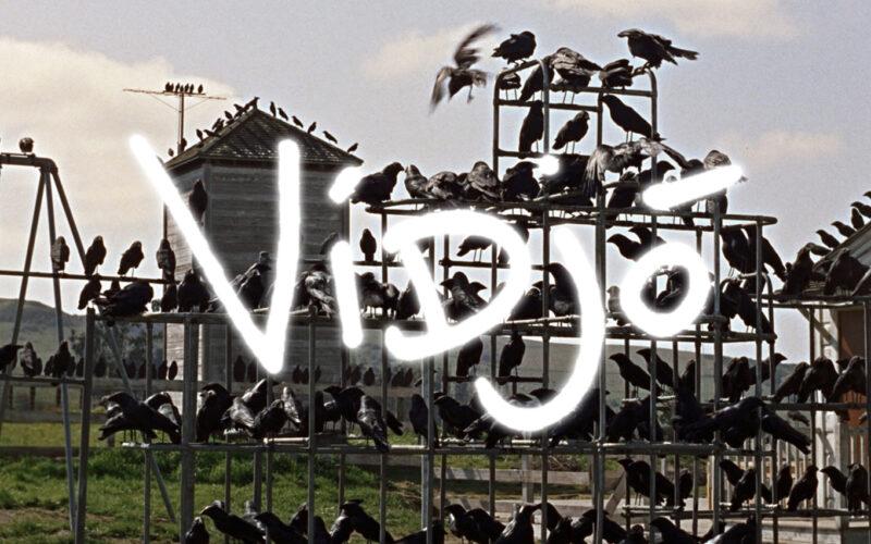 crows on playground